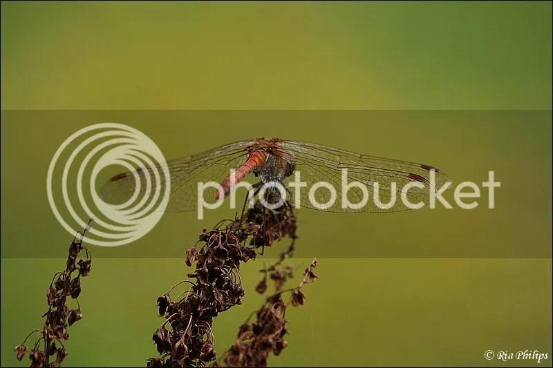 photo IMG_9722.jpg