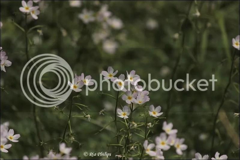 photo IMG_1665.jpg