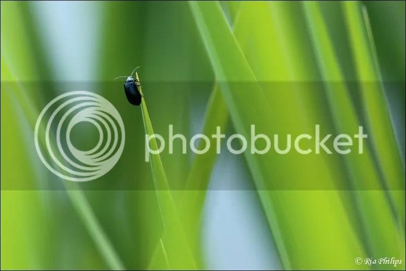 photo IMG_3307.jpg