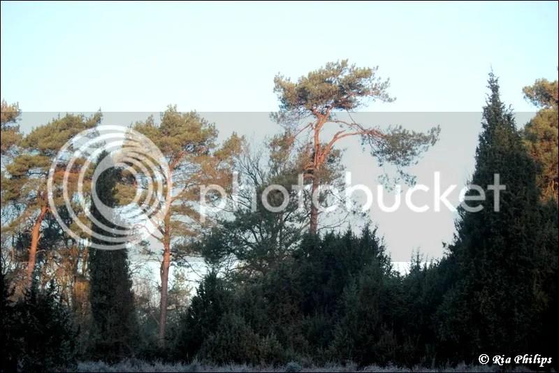 photo IMG_1675.jpg