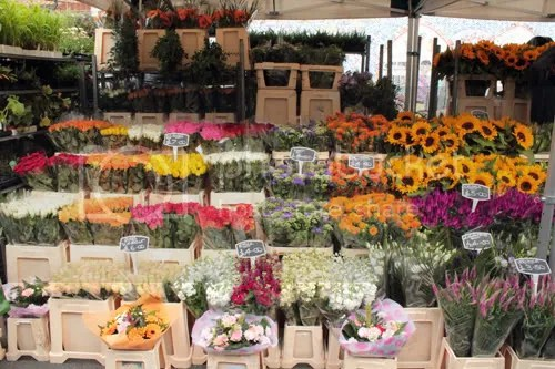 Colombia Road Flower Market 10