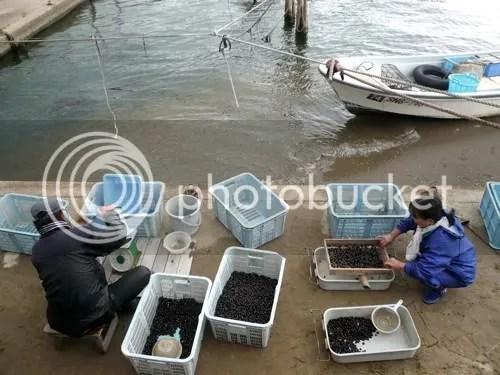 shijimi fishing 8