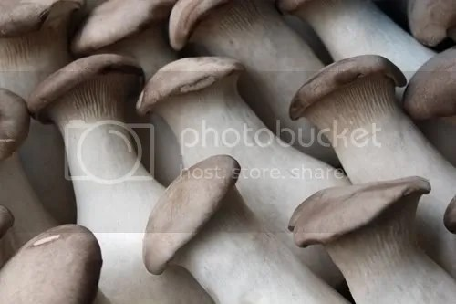 maltby mushrooms 1