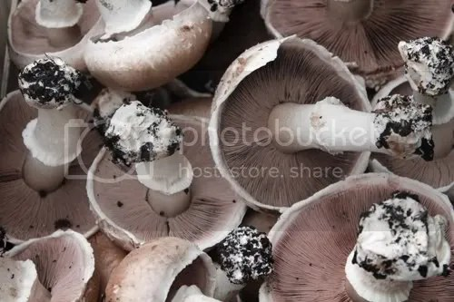 maltby mushrooms 3