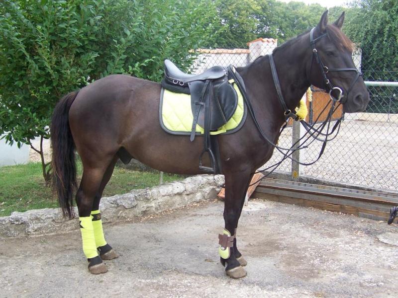 tapis 4 forum cheval