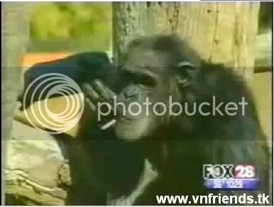 khỉ hút thuốc điệu nghệ,clip vui vnfriends.tk
