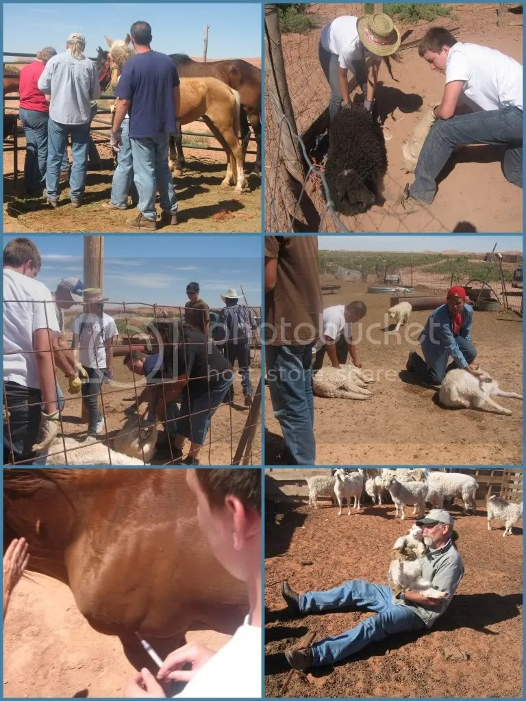 Church of the Cross Sacramento, CA did livestock vaccinations for Navajo residents around Navajo Lutheran Mission