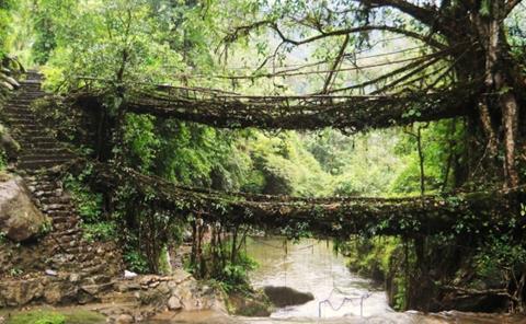 living-root-bridges-home-600x371.jpg