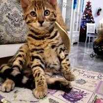 Купить котенка в г. Минск, цена с фото — Объявления о ...