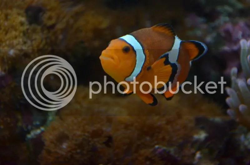Marlin-Coral