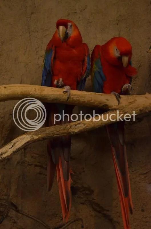 Macaw Caw