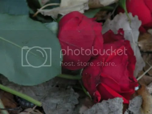close up of the fallen flowers