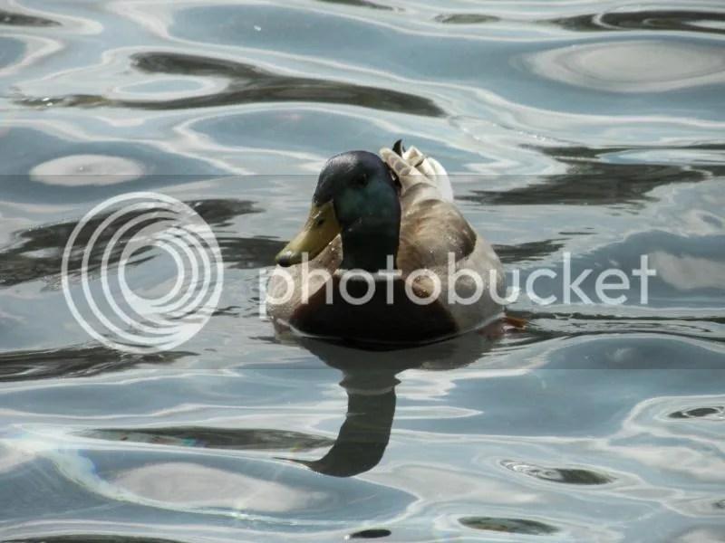 Springy Swim