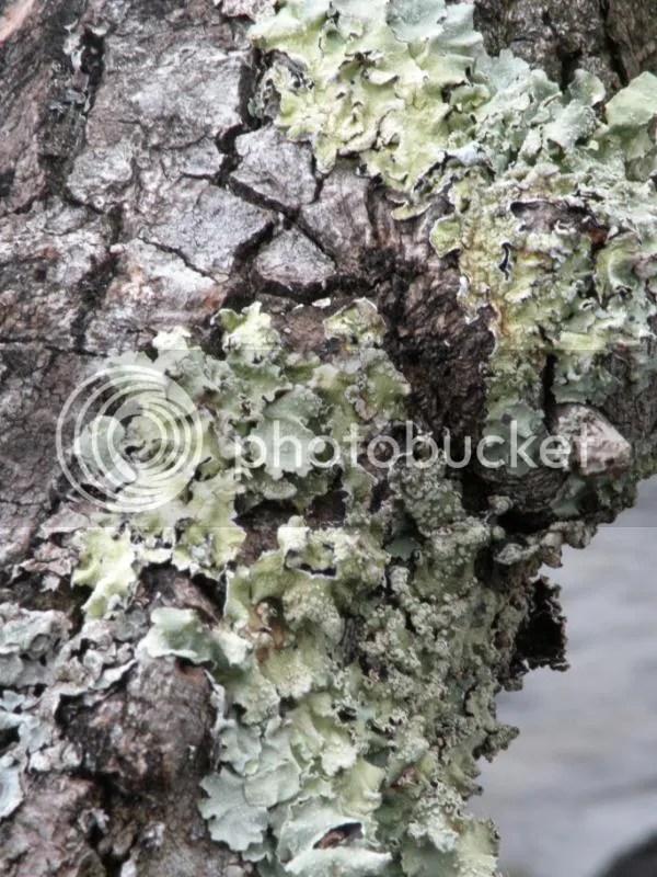 Hooray lichen!