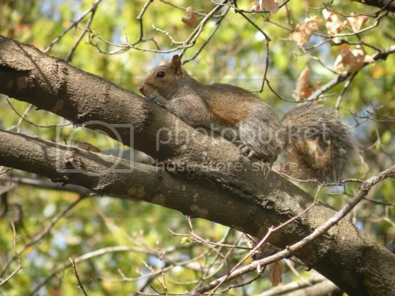 squirrels taking over the world