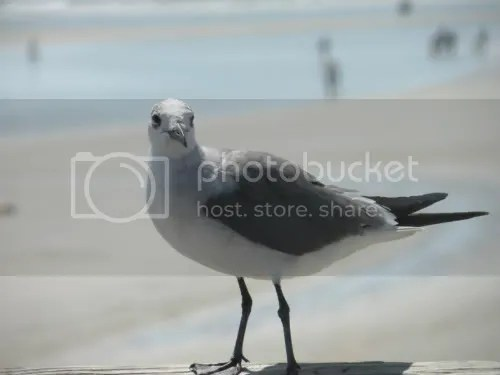 This gull knows how to work it!