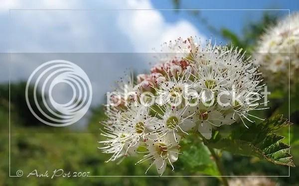 Log5-6-07-8.jpg