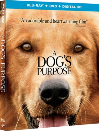 A Dogs Purpose 2017 1080p BluRay x264 DTS-HDChina