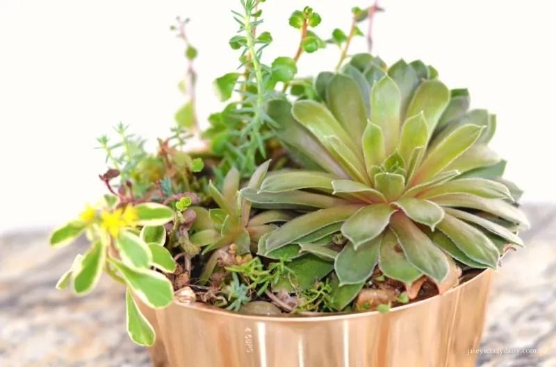 Repurposed Succulent Container Garden