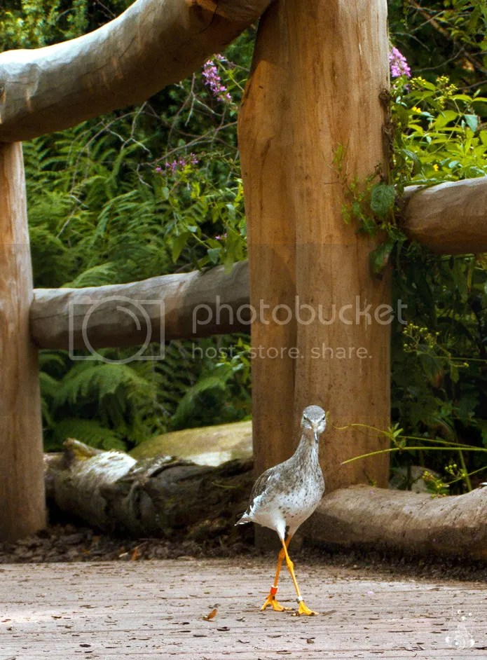 Bird on a bridge, in the Nordic and Alaskan Flora and Fauna Exhibition in the Dresden Zoo
