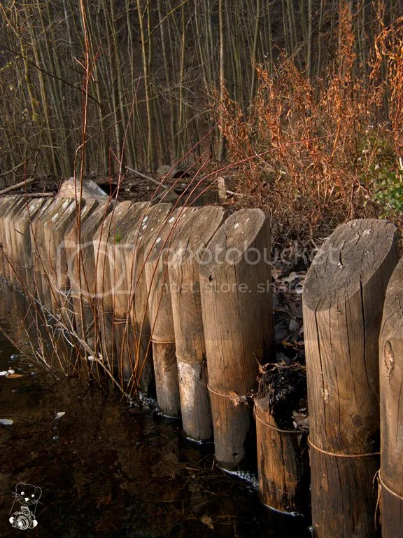 Dam made of wooden poles at a little lake in the forest near Coswig, in Germany