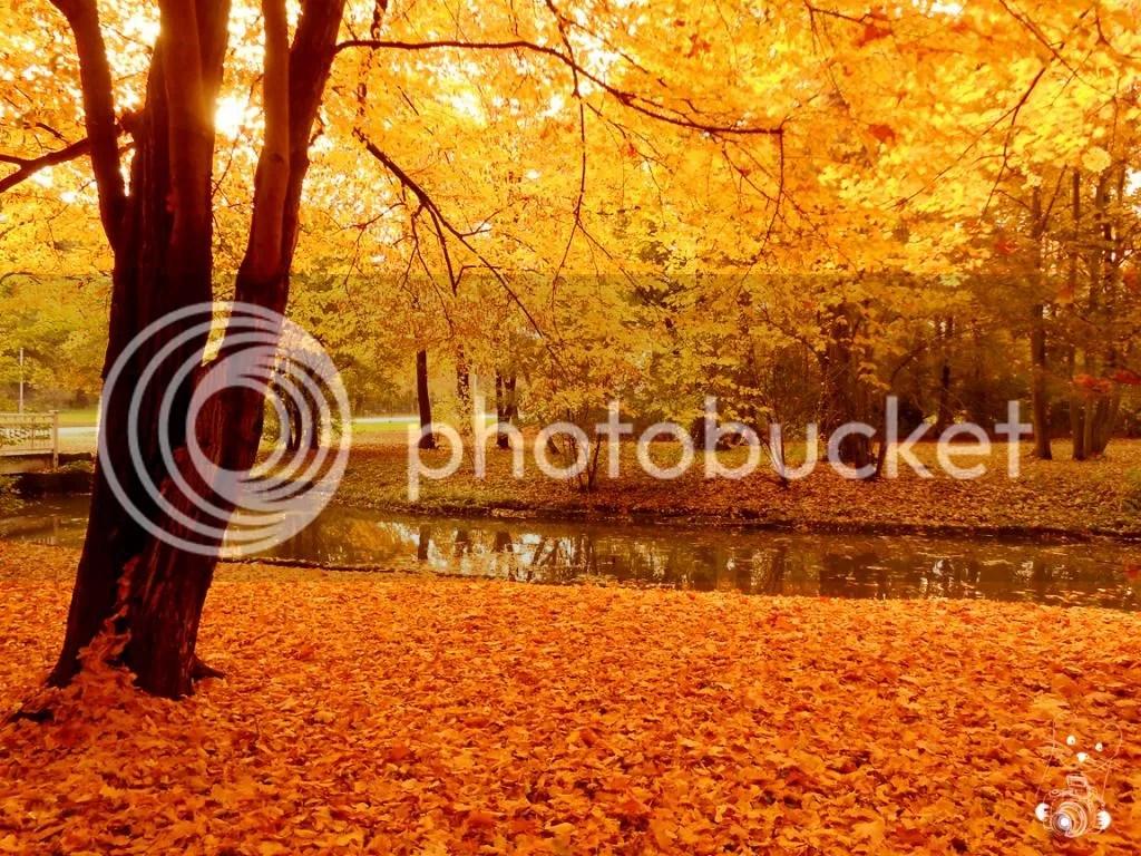 Golden Autumn in Großer Garten in Dresden, Germany