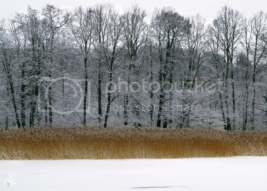 Frozen lake in the park near Hermsdorf castle in Saxony, Germany