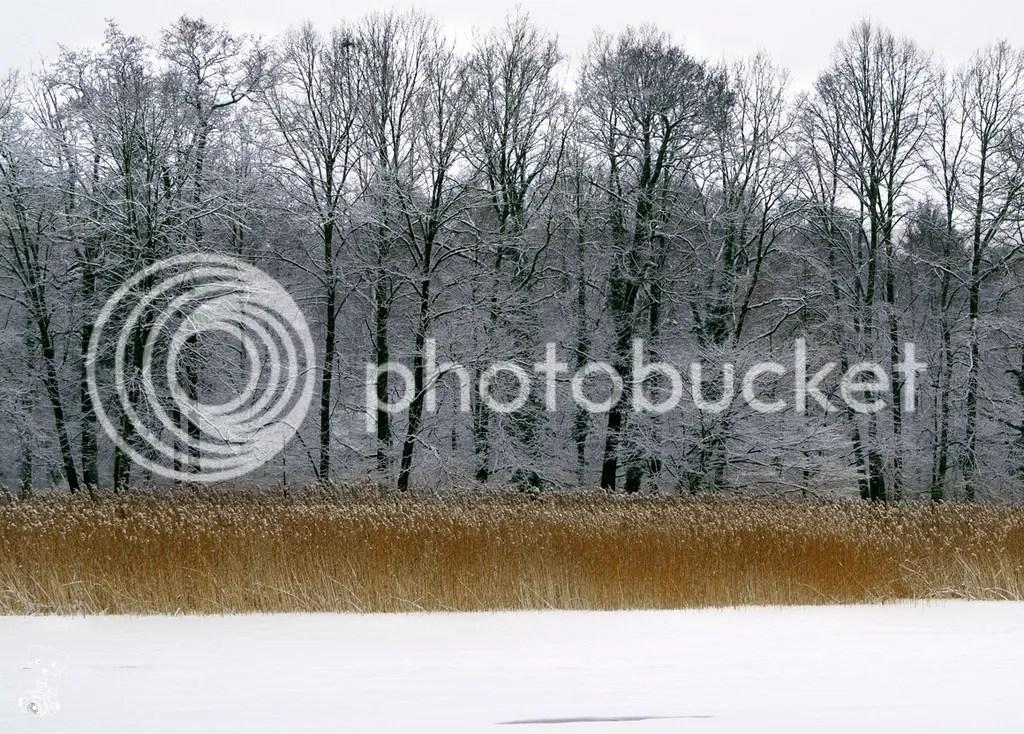 Frozen lake in the park near Hermsdorf castle in Saxony, Germany
