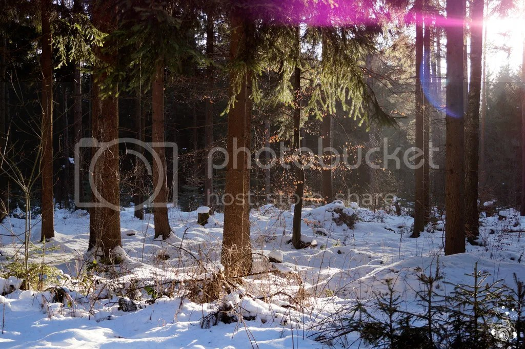 Filtered light throught the trees in the forest in Tharandt, Saxony, Germany