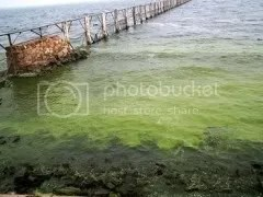 Polluted Taihu Lake, 3