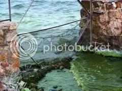 Polluted Taihu Lake, 4