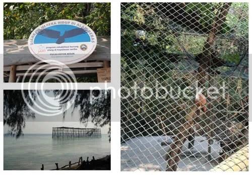 Penangkaran Elang - Pulau Kotok