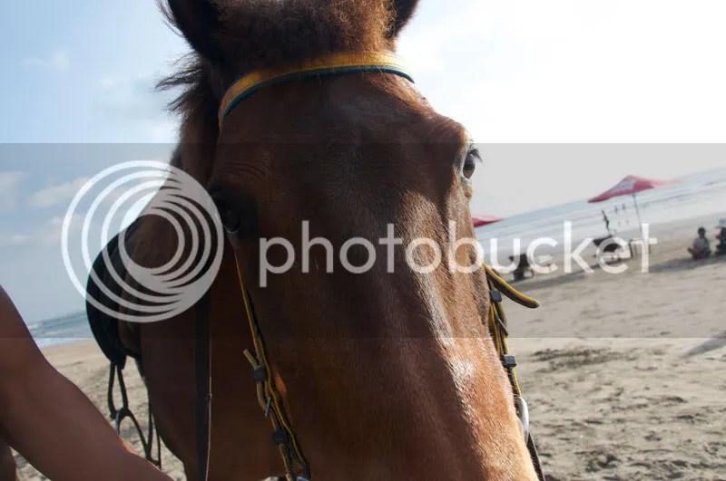 horse,beach,horse riding,animals