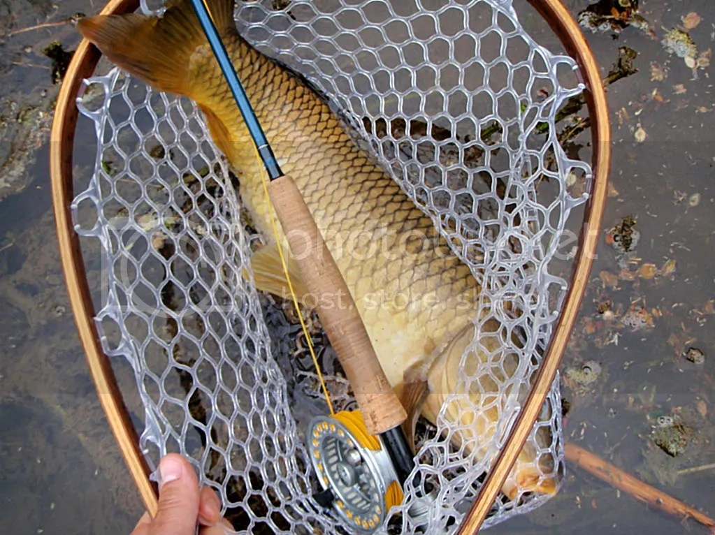 carp037.jpg picture by Bentrod2010