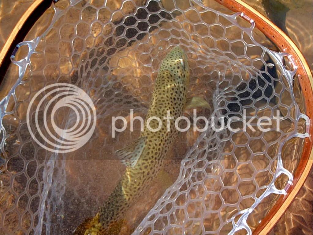 elkriver2010007.jpg picture by Bentrod2010