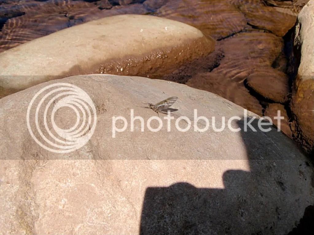 elkriver2010017.jpg picture by Bentrod2010