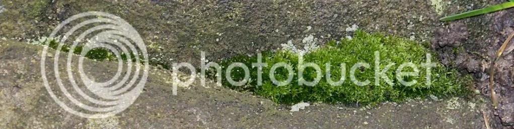 Stanton Moor - Flora