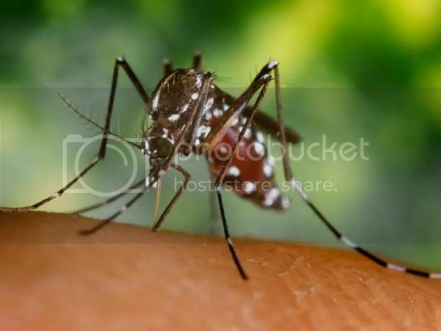 photo chikungunya.jpg