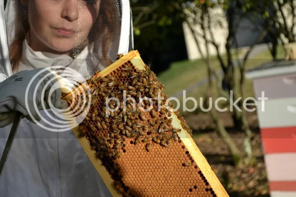 photo Bees11_zpsxvprk7cp.jpg