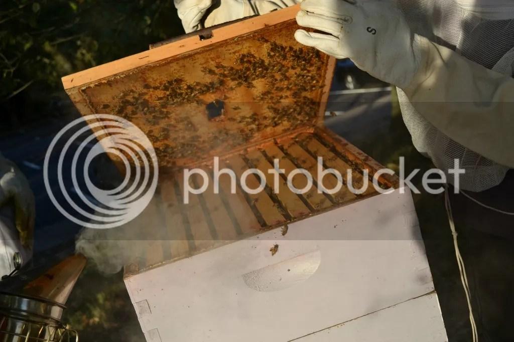 photo Bees15_zpss4ewf6sp.jpg