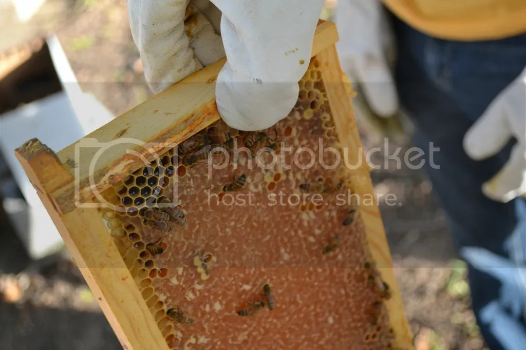 photo Bees21_zps312mppyz.jpg