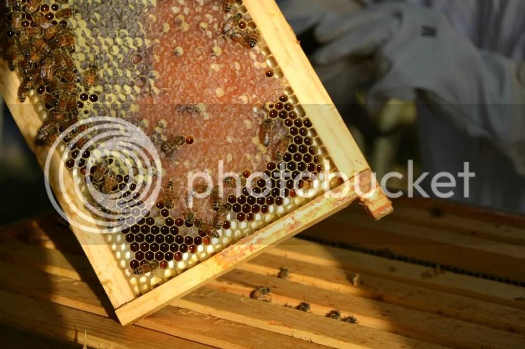 photo Bees28_zpsclugdatc.jpg