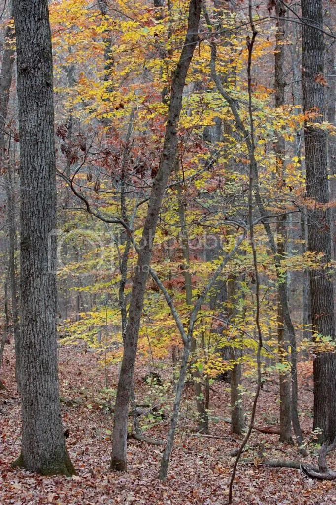 Autumn Leaves in the Woods