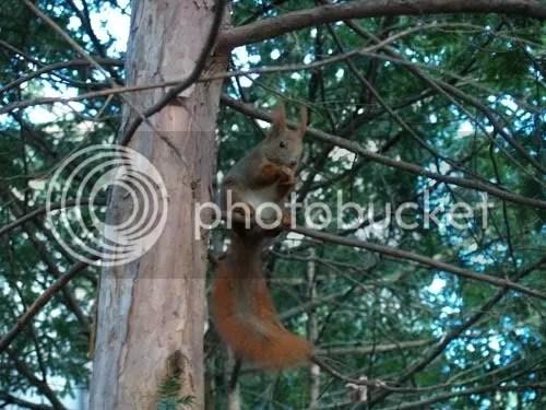 Moradores de los árboles