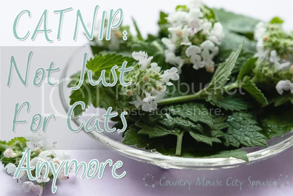 Catnip: Not Just for Cats Anymore- Country Mouse City Spouse