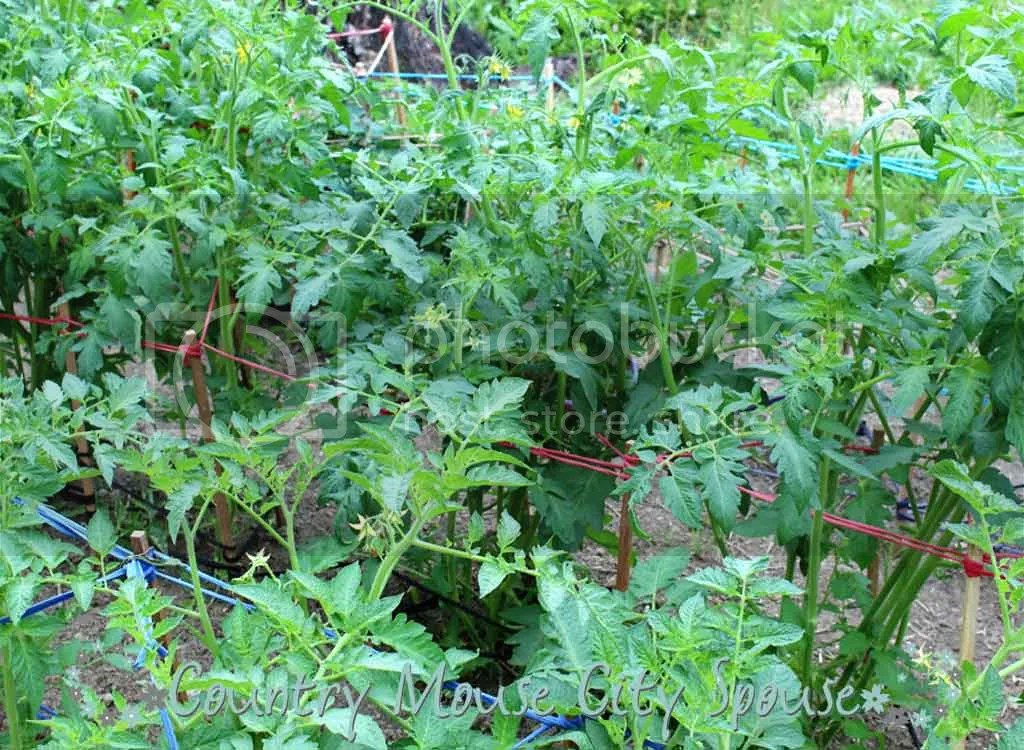 All Those Weeds!! Finding Time to Weed the Garden- Country Mouse City Spouse Let's face it: we are all busy. If gardening is part of your life, here are a few tips to keep ahead. | Gardening | Self-Sufficient | Homemaking | Home Economics | Time Management | Family Management |