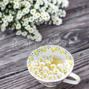Chamomile: Six Easy Herbs to Get You Started Growing Your Own Medicine- Country Mouse City Spouse