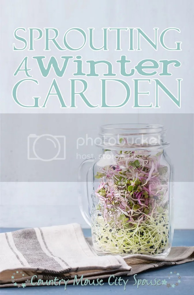 Sprouting a Winter Garden- Country Mouse City Spouse Nutritious, tasty sprouts are perfect for indoor winter gardening. In just a few days you can turn seeds into fresh vegetables.