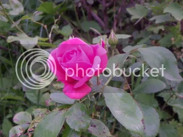 photo IMGP3064.jpg