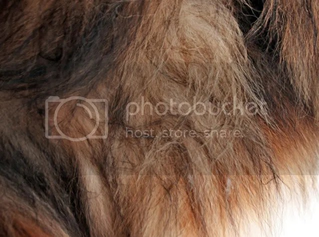 Best Way To Get Knots Out Of Dog S Hair